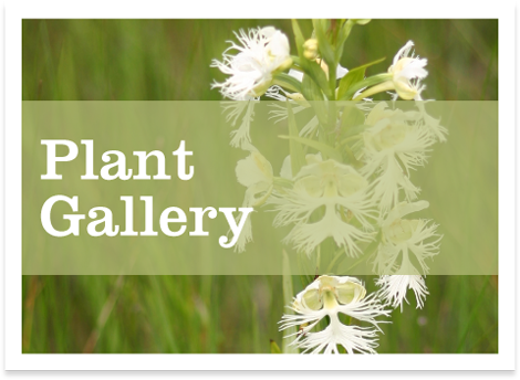 plant gallery