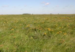 Prairie types prairie pollination for Soil zones saskatchewan
