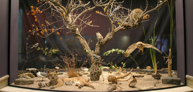 Photo of the 'A Sampling of Rich Natural Diversity' display case in the Parklands/Mixedwoods Gallery at The Manitoba Museum, Winnipeg.
